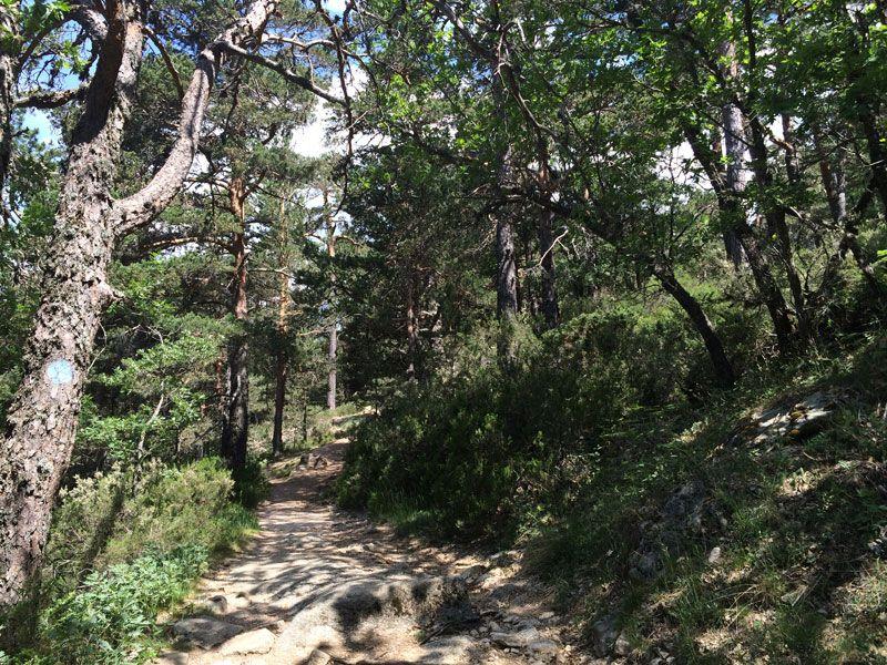 Por el bosque de la Sierra de Guadarrama