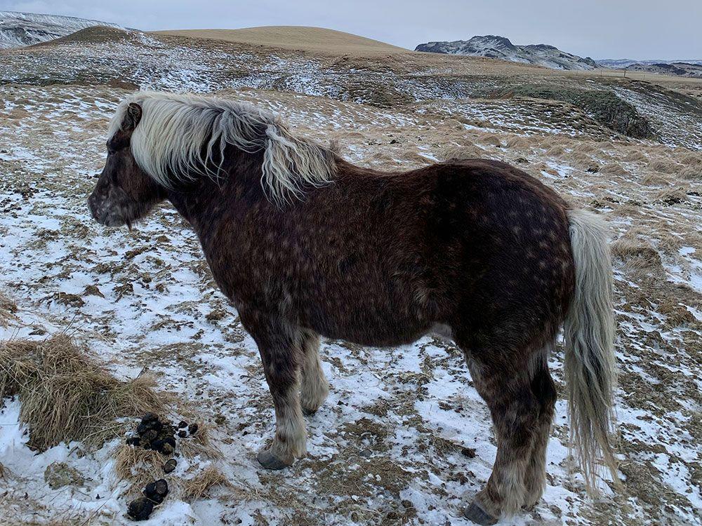 Alojamiento en Islandia - Skyggnir Bed and Breakfast - Caballo