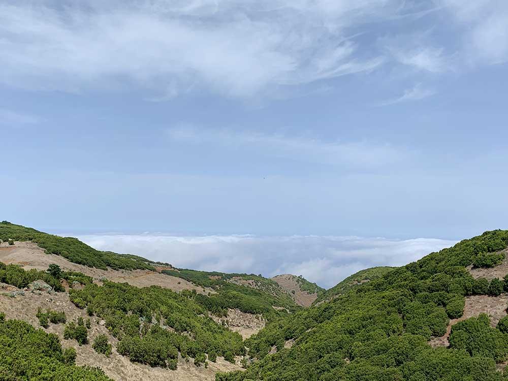 Árbol Garoé - El Hierro - Mar de nubes