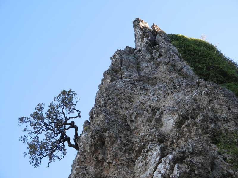 Arbolito saliendo de una pronunciada roca en la cima de la Piedra del Cambrón