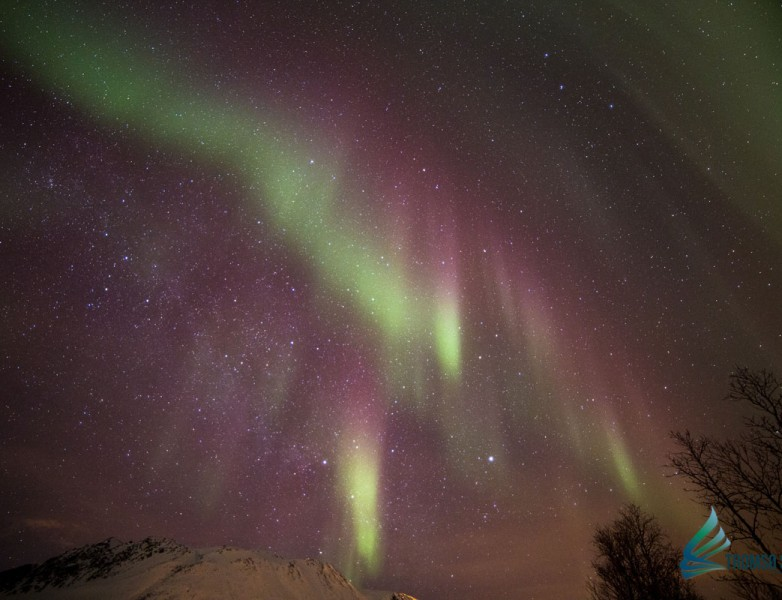 Auroras boreales cazadas por Tromsø Safari