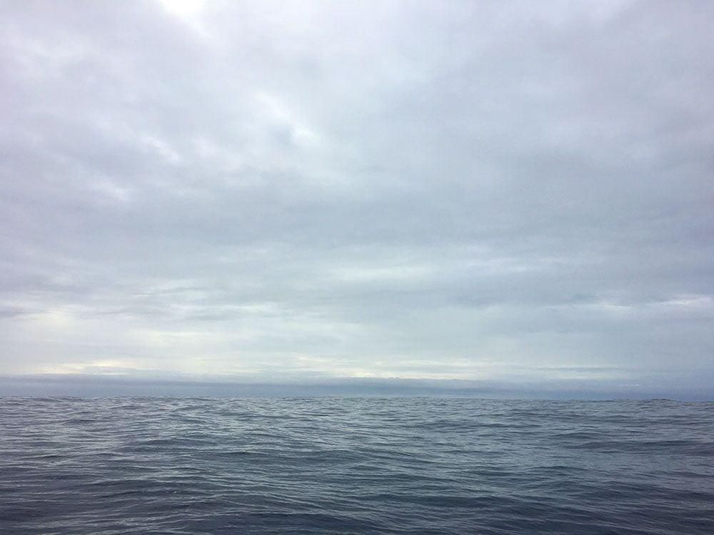 Avistamiento ballenas azores - Whale Watching Terra Azores - De camino