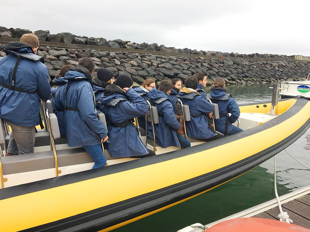 Avistamiento ballenas azores - Whale Watching Terra Azores - Lancha de Terra Azores