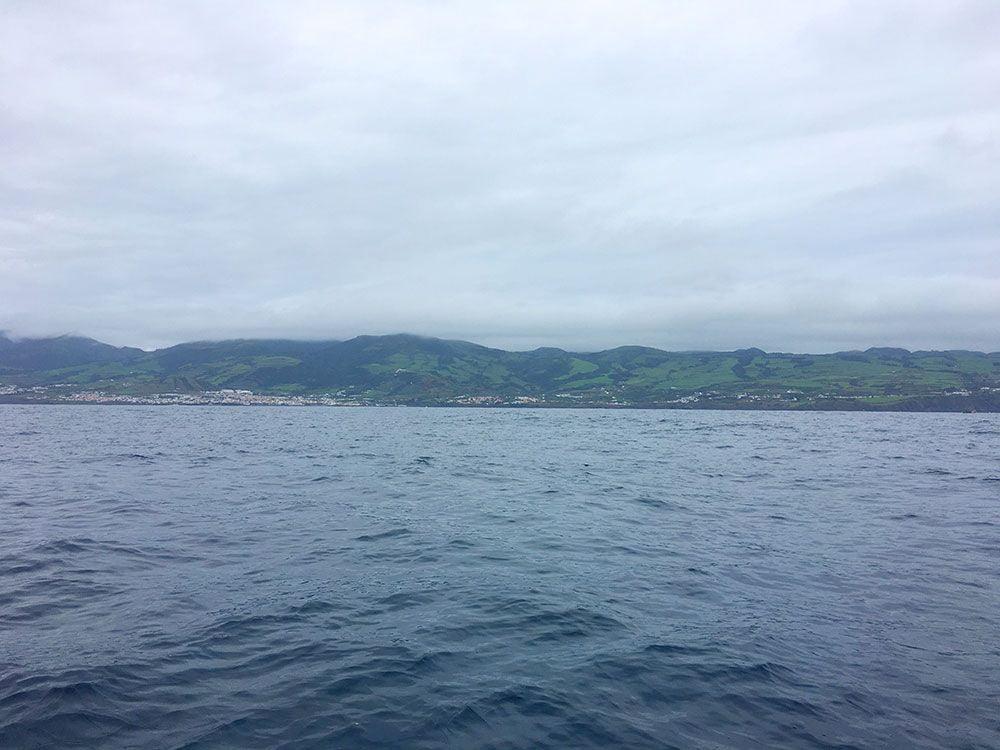 Avistamiento ballenas azores - Whale Watching Terra Azores - Isla de Sao Miguel