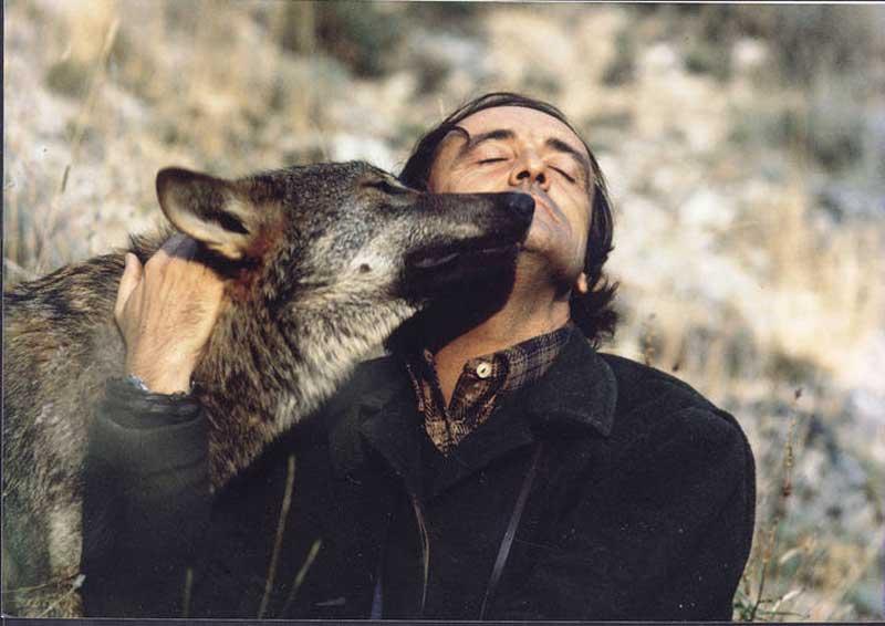 Avistamiento de lobos en Zamora - Felix Rodríguez de la Fuente