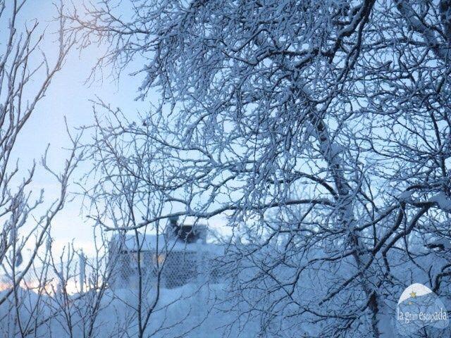 Bosque nevado de Kiruna, al norte de Suecia