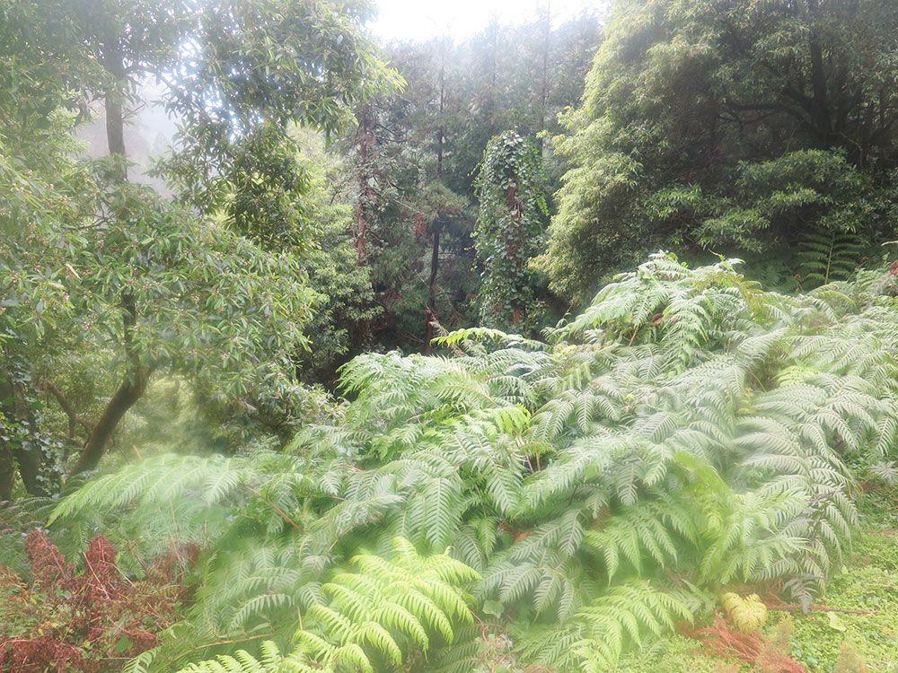 Caldeira Velha - São Miguel - Islas Azores - Helechos