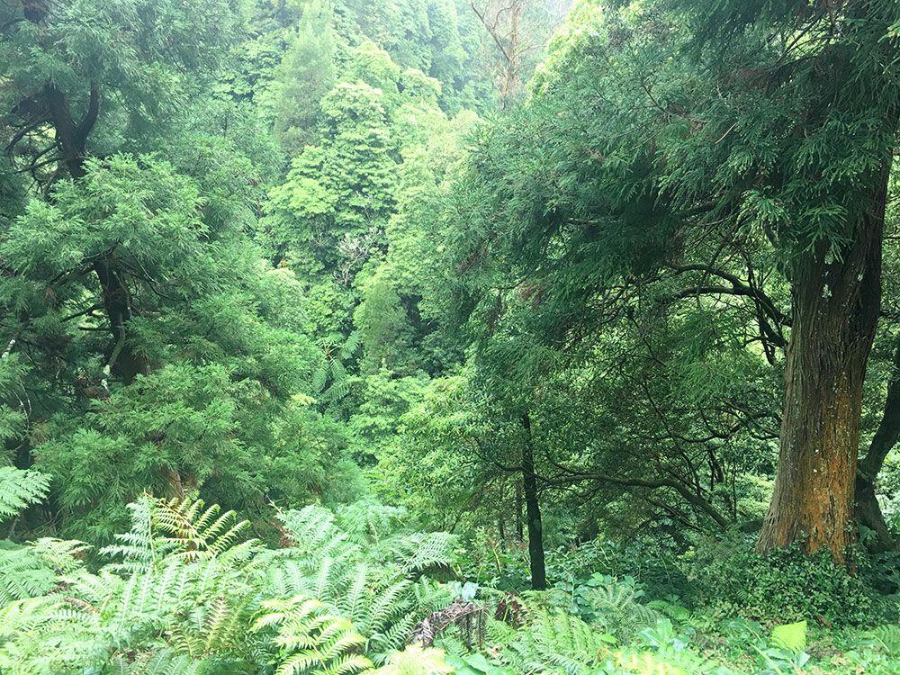 Caldeira Velha - São Miguel - Islas Azores - Bosque