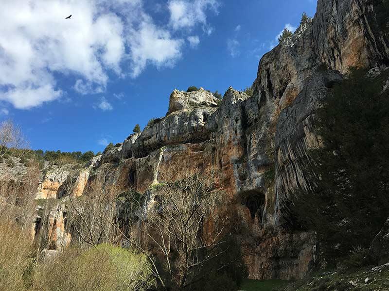 Cañón del Río Lobos - Buitre sobrevolando el cielo