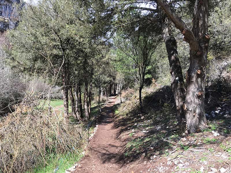 Cañón del Río Lobos - Caminito después de dejar la ermita