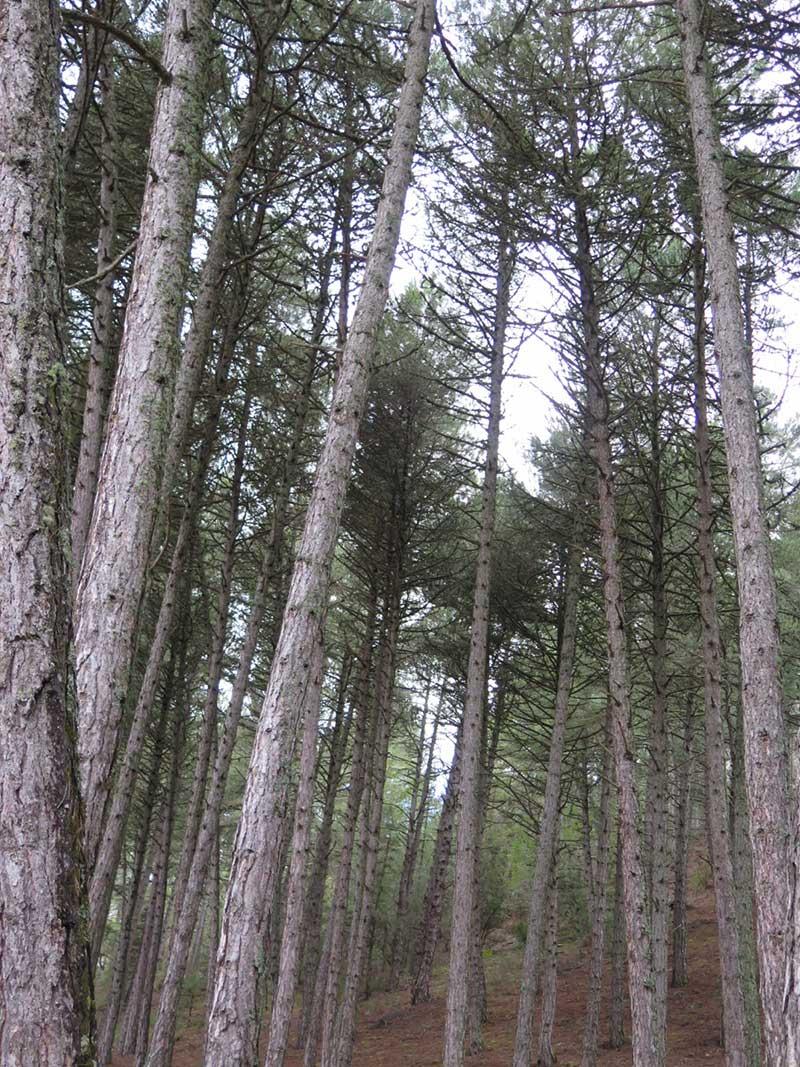 Cañón del Río Lobos - Flora del Parque
