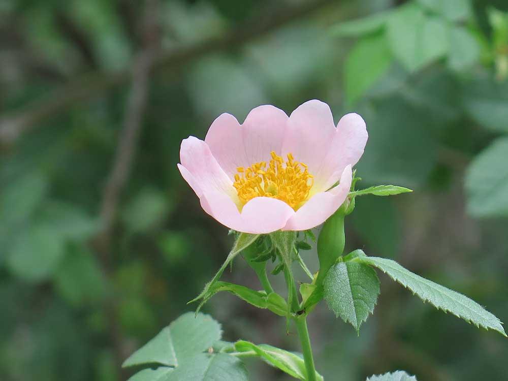 Detalle de una flor
