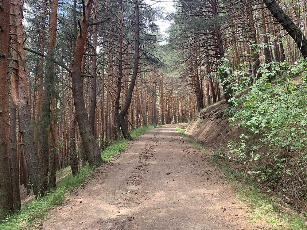 Tramo de pinos