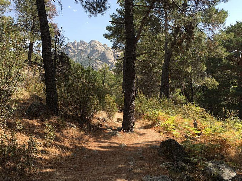 Cómo llegar a la Charca Verde - La Pedriza - Senda junto al río