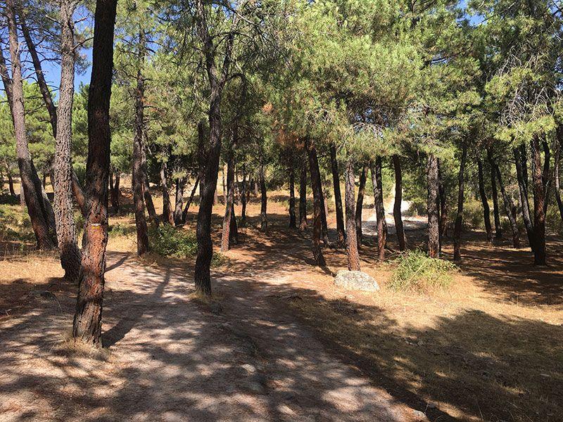 Cómo llegar a la Charca Verde - La Pedriza - Entorno del sendero