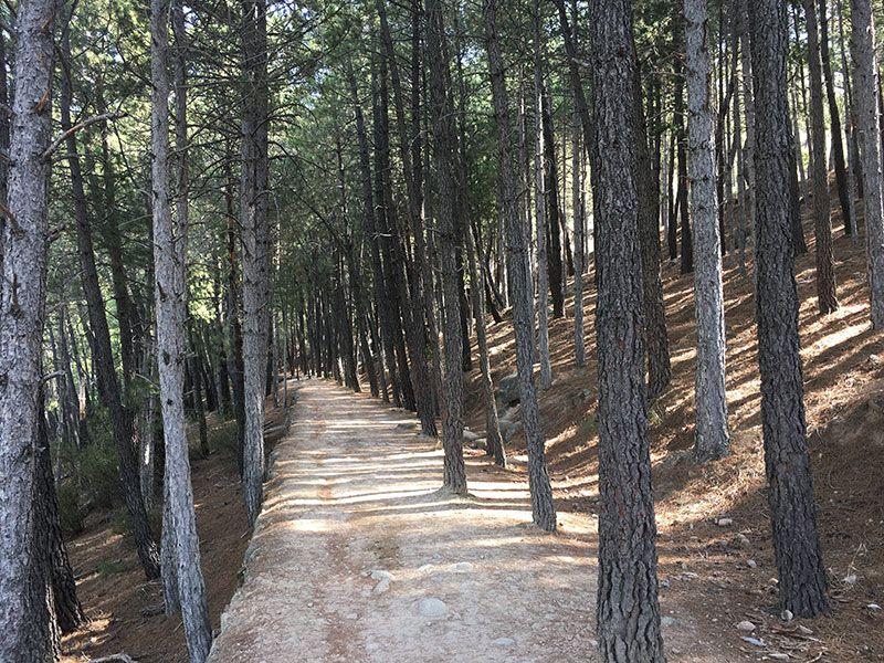Cómo llegar a la Charca Verde - La Pedriza - Tramo sombreado