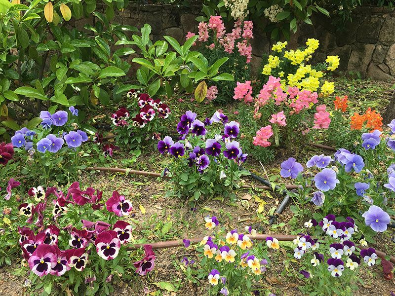 El Bosque Encantado - Madrid - Flores de colores