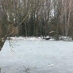 el-bosque-finlandes-rascafria-portada