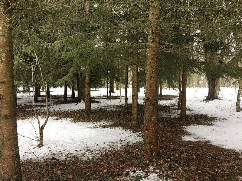 El Bosque Finlandés - Rascafría - Vista general