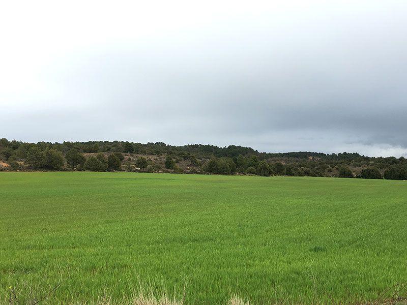 Entorno del Río Lobos - Verdes pastos