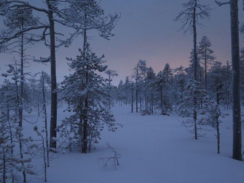 Excursión de raquetas de nieve en Rovaniemi - Atardecer