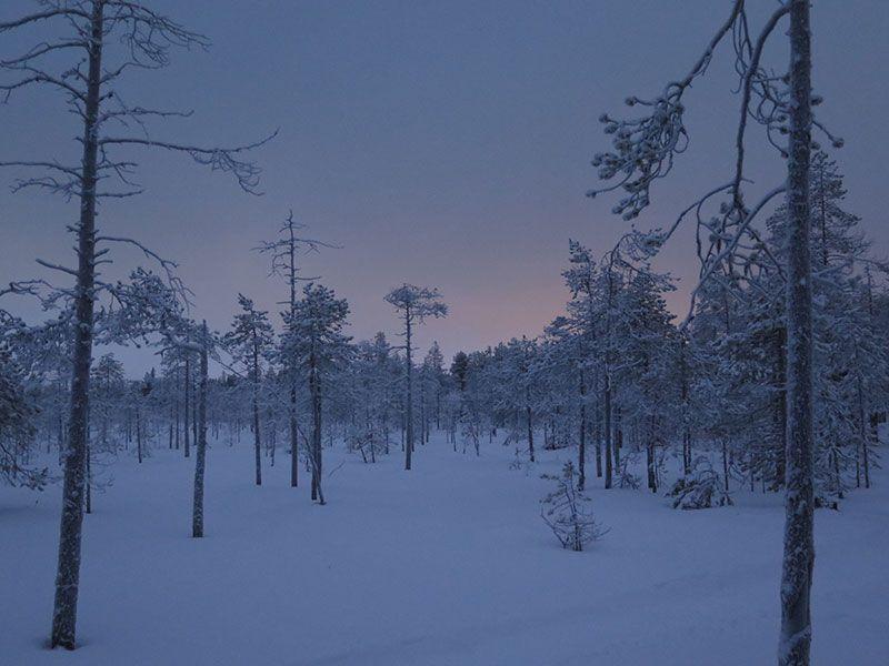 Excursión de raquetas de nieve en Rovaniemi - Luz
