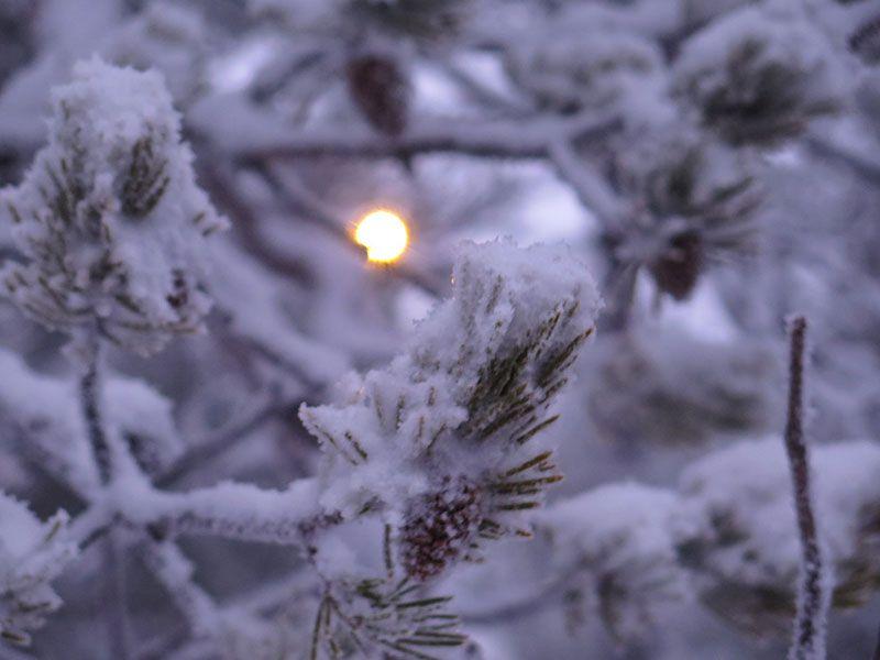 Excursión de raquetas de nieve en Rovaniemi - Detalle de hoja