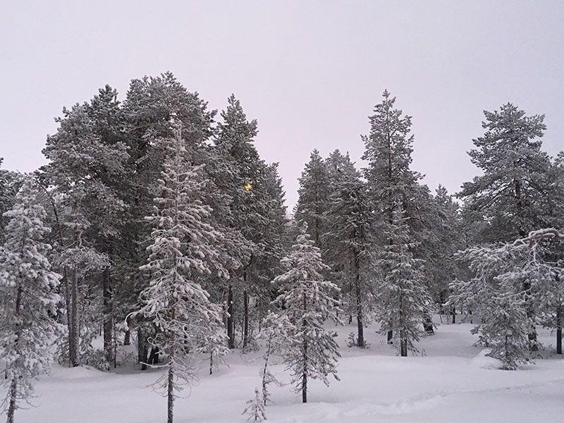 Excursión de raquetas de nieve en Rovaniemi - Paisajes