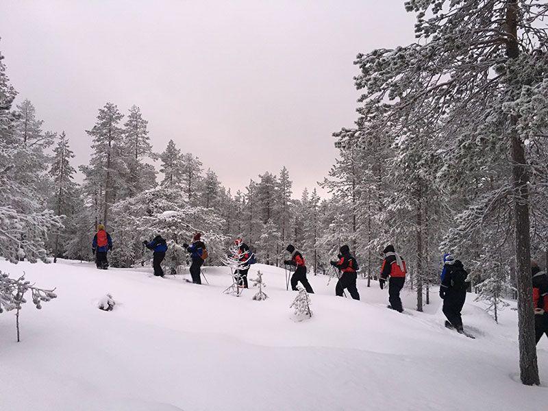 Excursión de raquetas de nieve en Rovaniemi - De ruta por el bosque