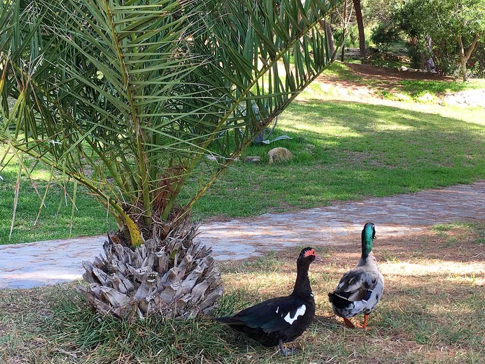 Fauna del Parque Reina Sofía