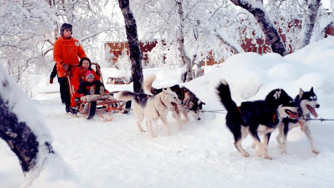 Tour con huskies en Kiruna