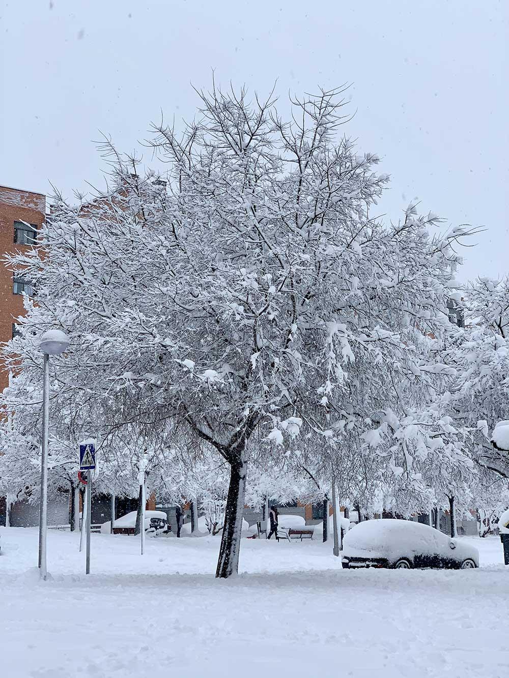 Árbol nevado