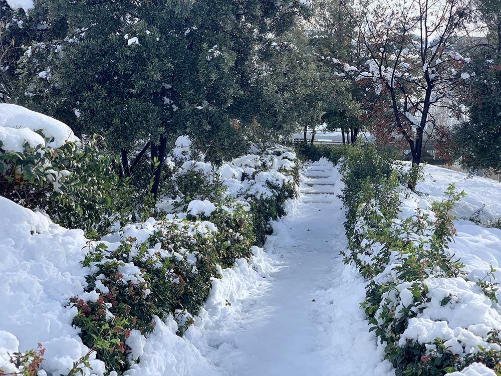 Vegetación nevada