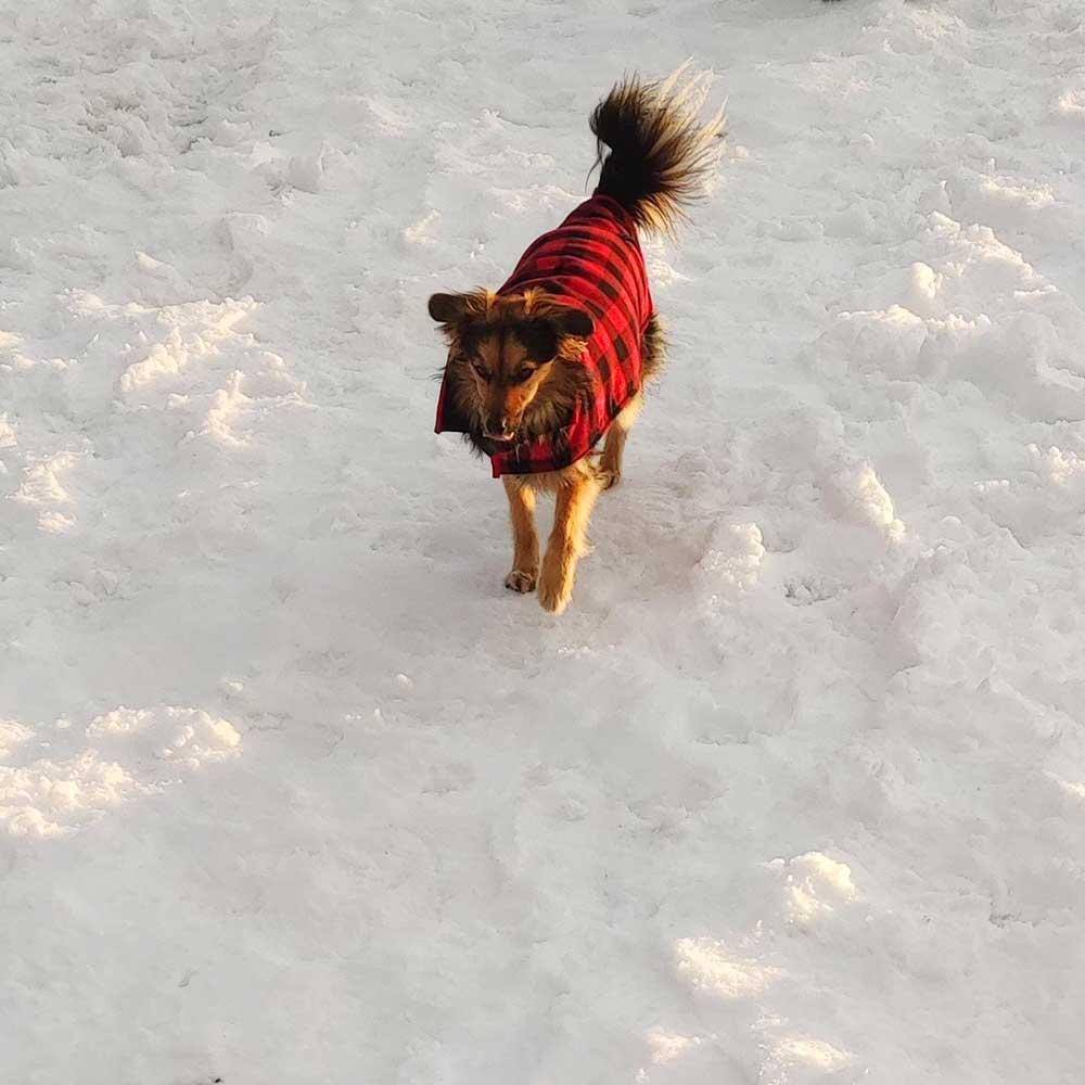 Lilith en la nieve
