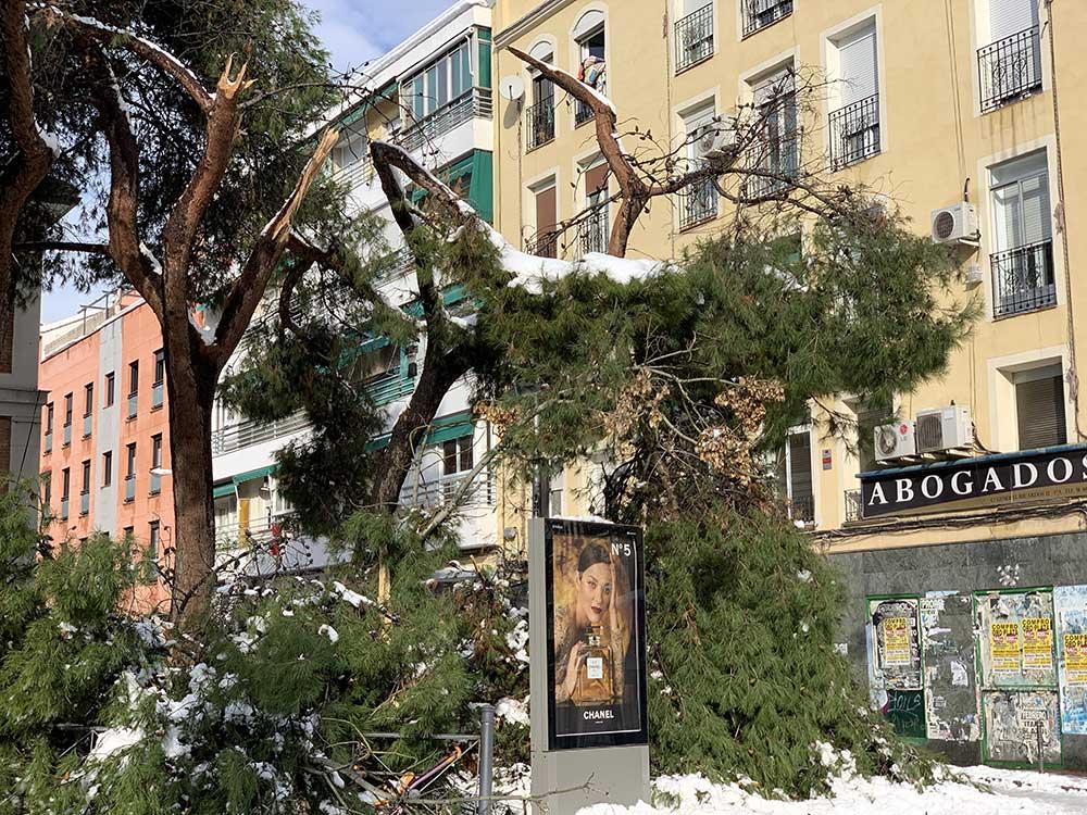Rama de árbol roto tras la nieve caída