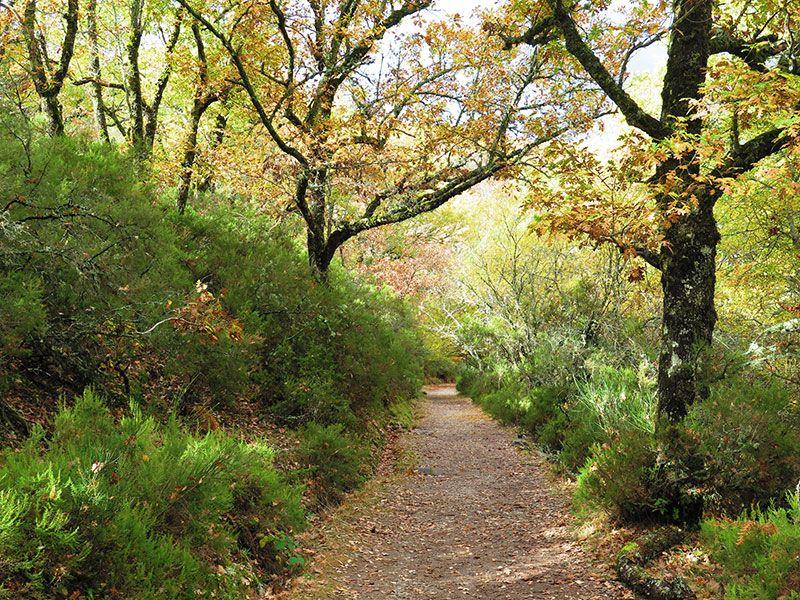 Hayedo de Montejo - Sierra del Rincón - Madrid -Camino de cuento de hadas