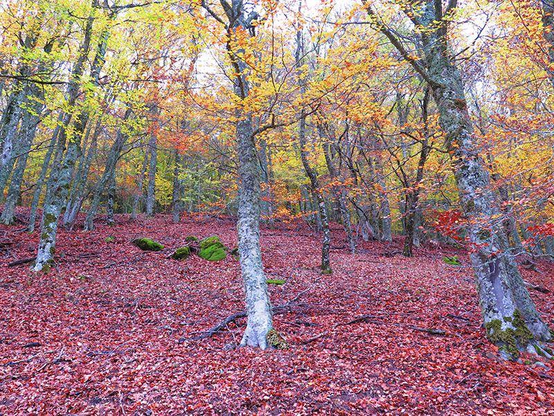Hayedo de Montejo - Sierra del Rincón - Madrid