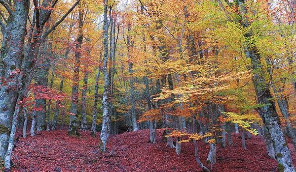 ¡El otoño ha llegado al Hayedo de Montejo!