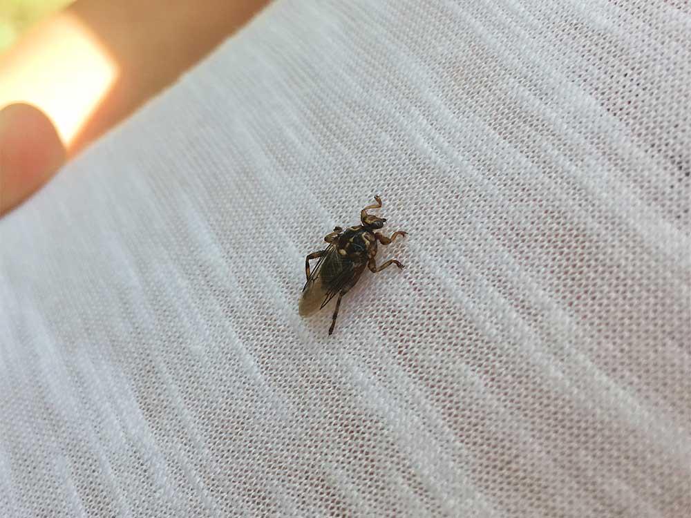 Hoz de Beteta y sumidero de Mata Asnos - Mosquito