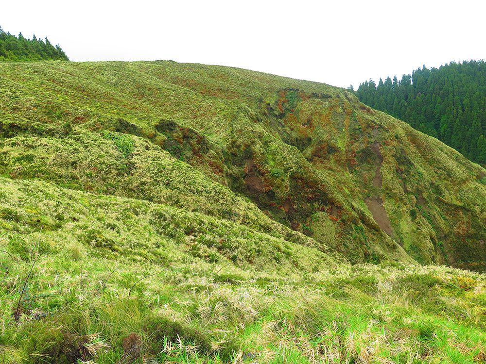 Lagoa Sete Cedades - Isla de São Miguel - Azores - Vegetación
