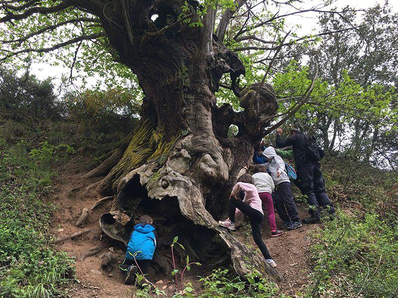 Mina de oro de Las Médulas - NIños jugando en el tronco