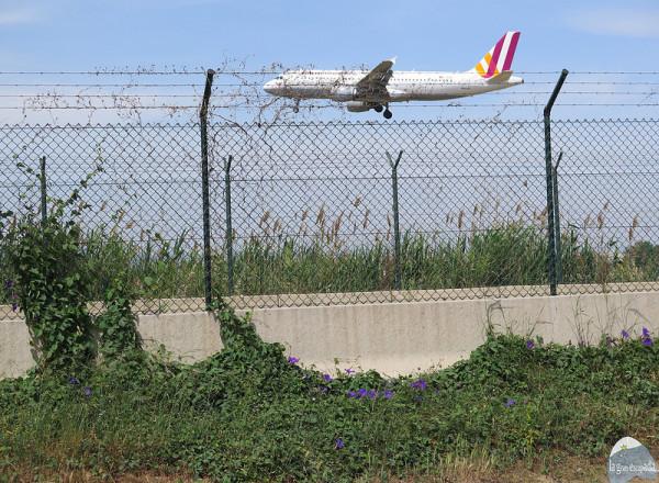 Avión a pocos segundos de aterrizar