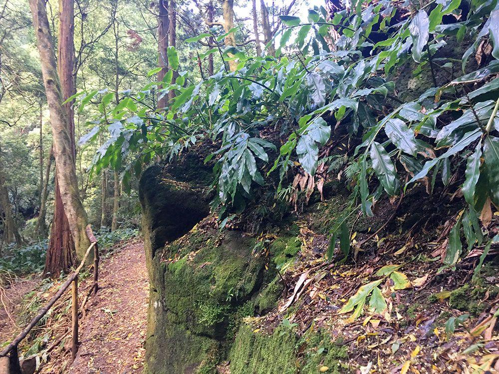 Parque Nacional Ribeira dos Caldeirões - São Miguel - Azores - Sendero