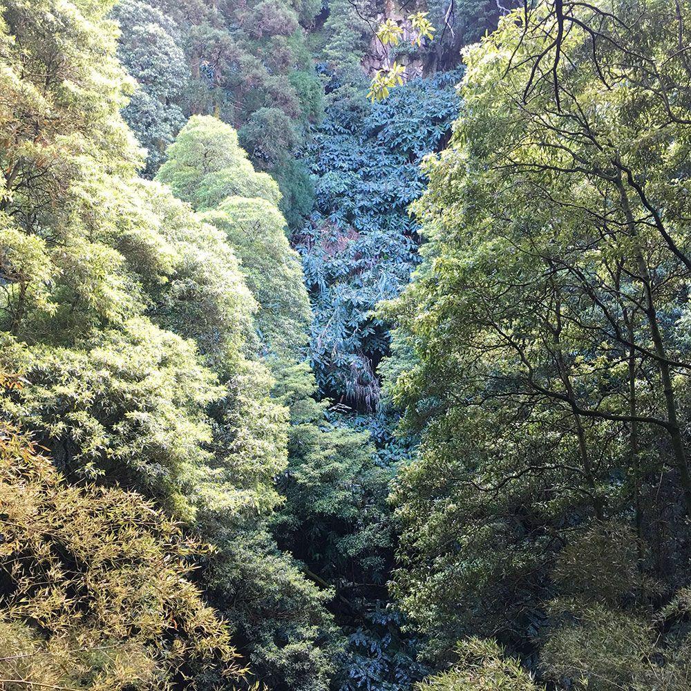 Parque Nacional Ribeira dos Caldeirões - São Miguel - Azores - Verdes