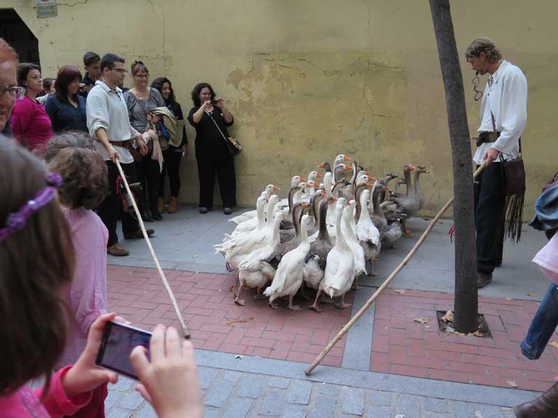 Paseo de Ocas guiadas por El Indio en el Mercado Medieval de Alcalá de Henares