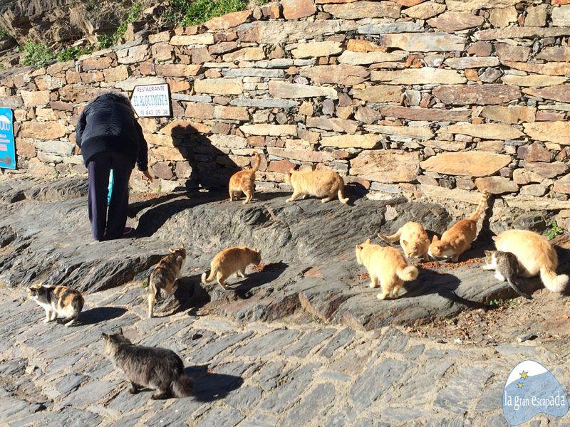 Vecina de Patones de Arriba alimentando a varios gatitos