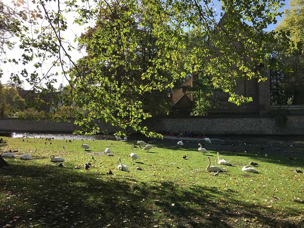 Cisnes en el Minnewater