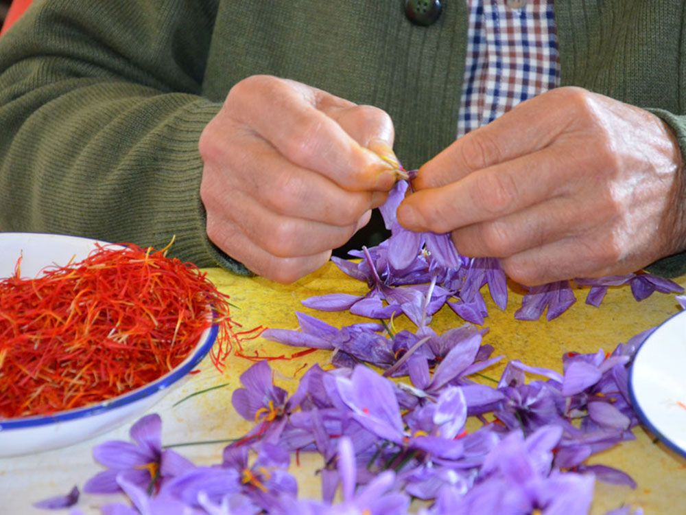 Qué ver en Consuegra - Fiesta de la Rosa del Azafrán
