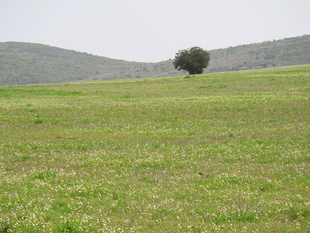 Qué ver en Consuegra - Naturaleza