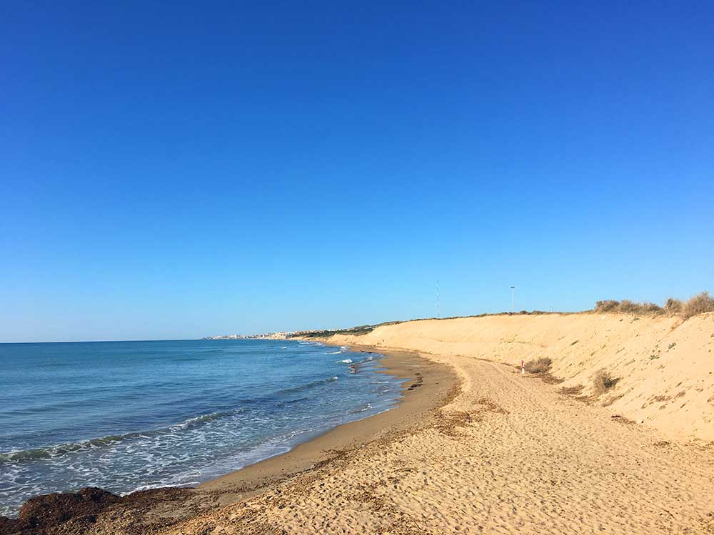 Qué ver en Guardamar - Ecosistema Dunar